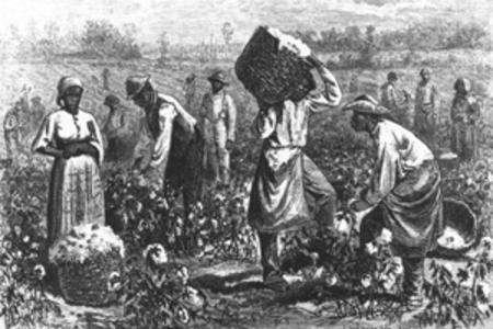 slaves_in_cotton_field_1