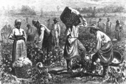 slaves_in_cotton_field_1
